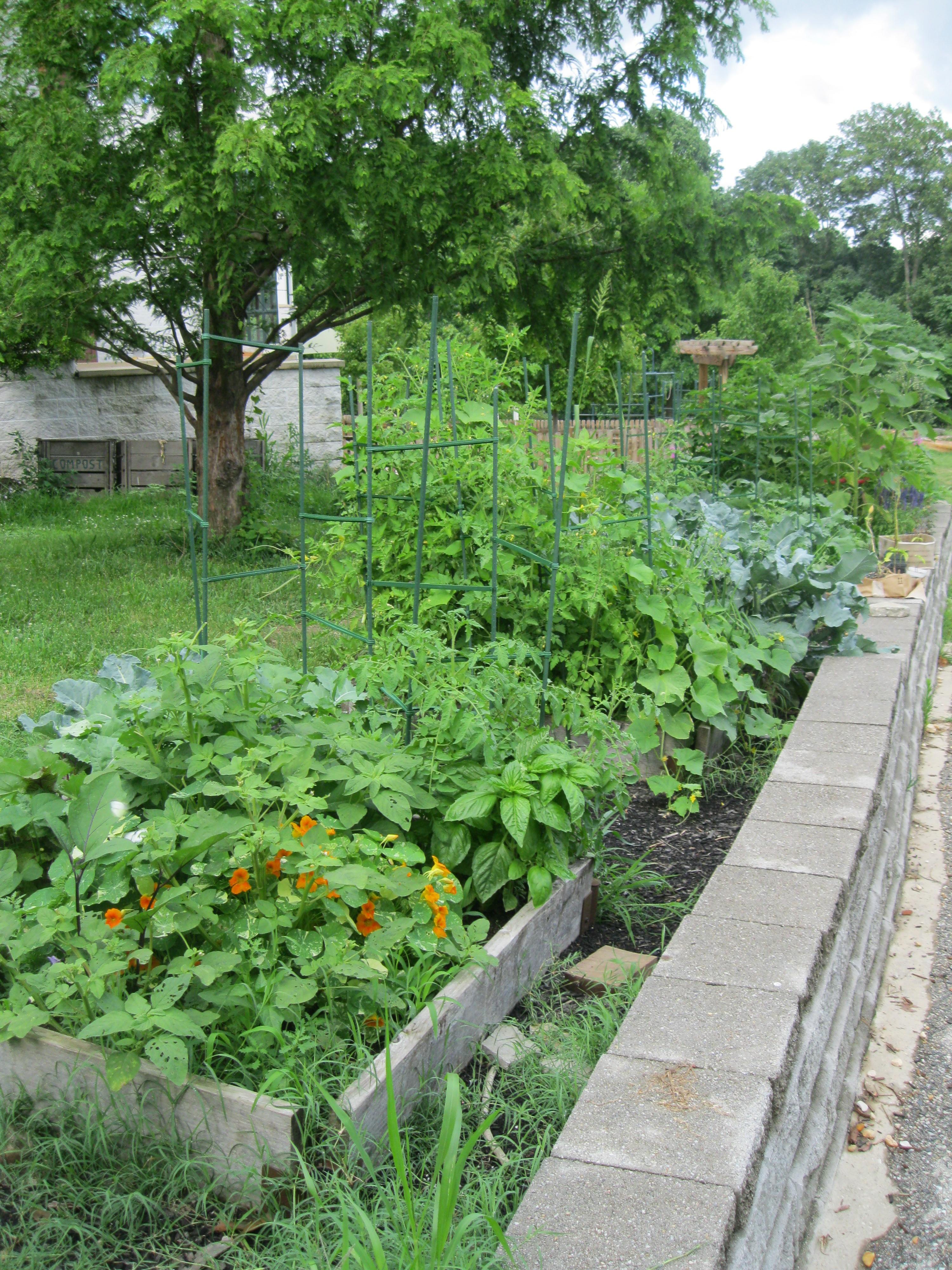 gardening green dragon bytes