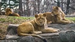 4G-Zoo (5 of 28)