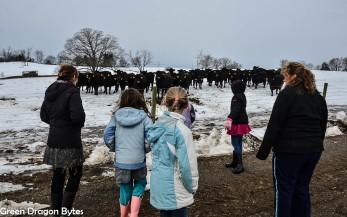 3Grade-CowFarm (14 of 28)