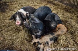 FarmTrip2015-2-22